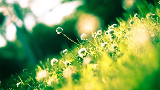 Příchod jara hlásí více práce na zahradě